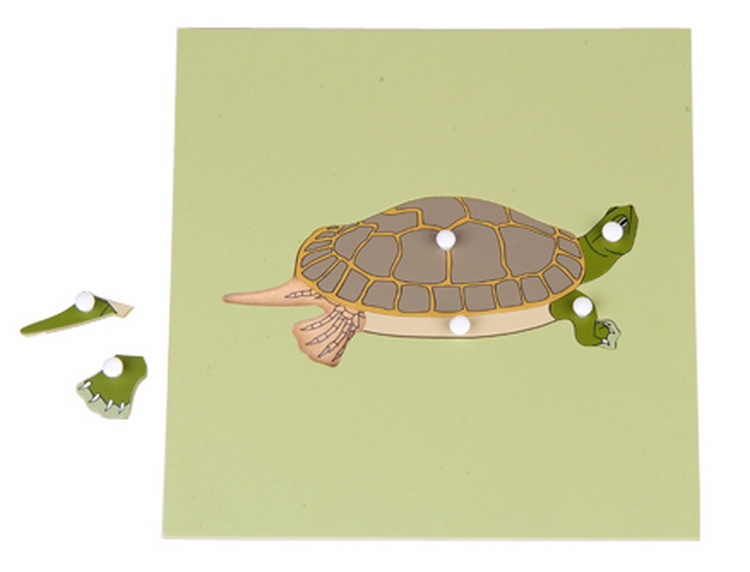 Turtle Skeleton Puzzle